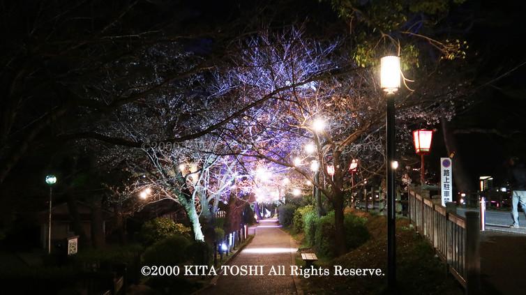 Light-up designer KITA TOSHI's design work Okz-Sakura6 (lighting designer)