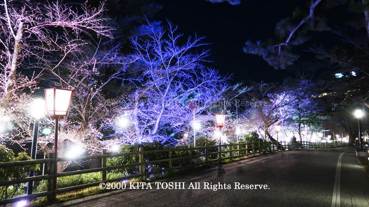 Light-up designer KITA TOSHI's design work Okz-Sakura2 (lighting designer)