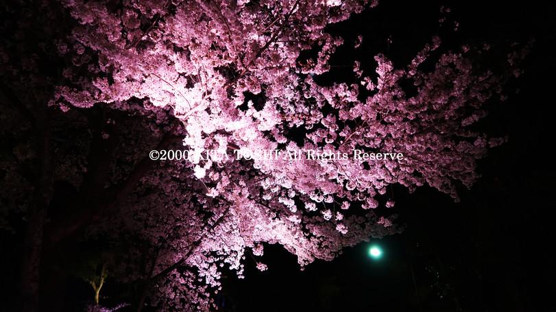 寺院ライトアップデザイナー作品Ci21-21 KITA TOSHI照明デザイナー