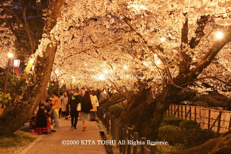 Light-up designer KITA TOSHI's design work Okz-Sakura12 (lighting designer)