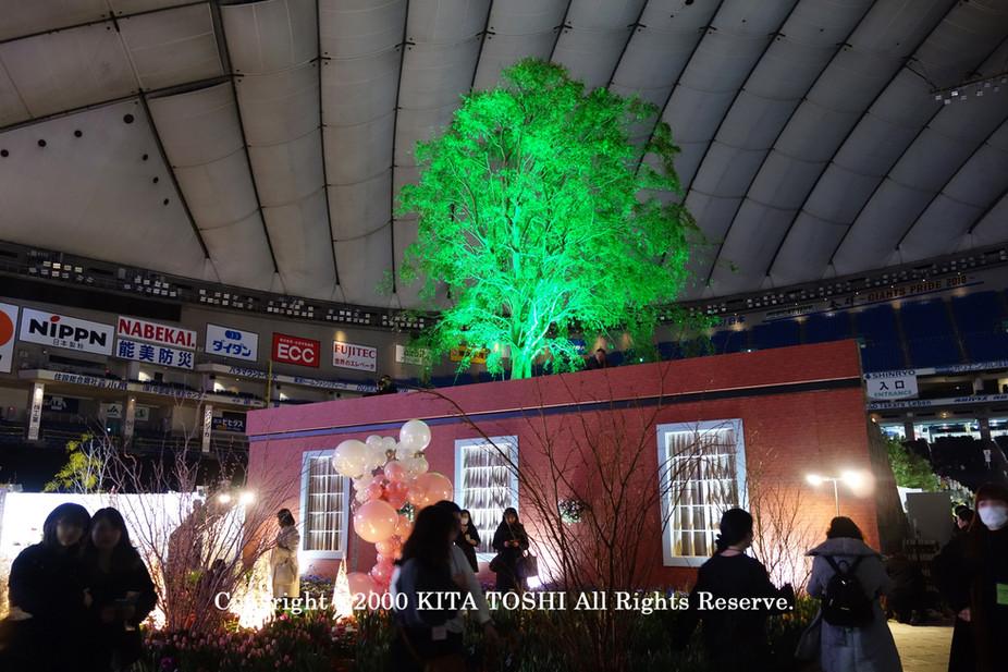 ライトアップ照明デザイナーのKITA TOSHI作品No,19-DoM10