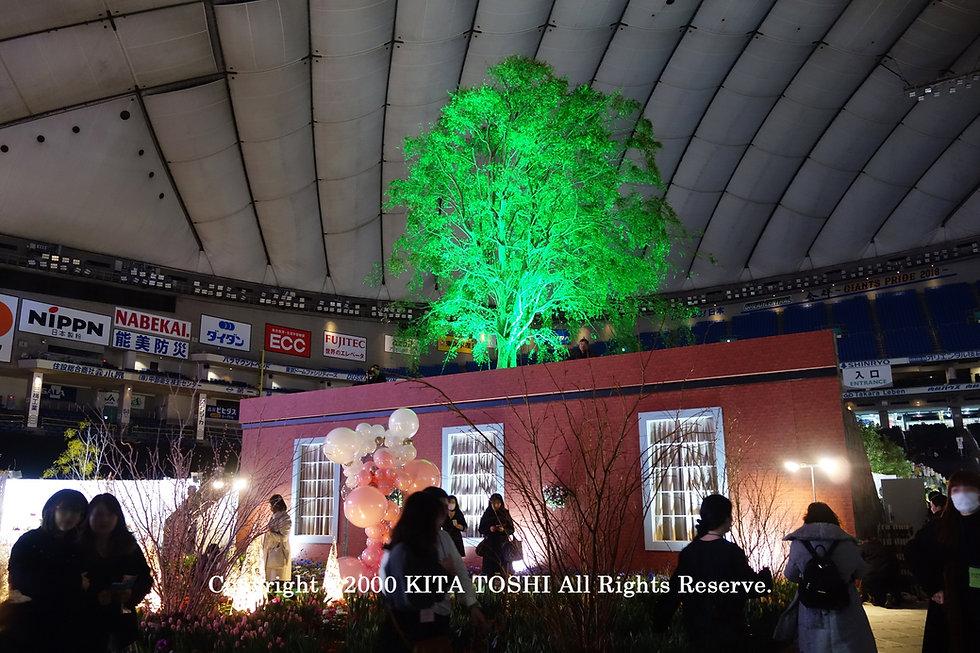 ライトアップ照明デザイナーのKITA TOSHI作品No,19-DoM20