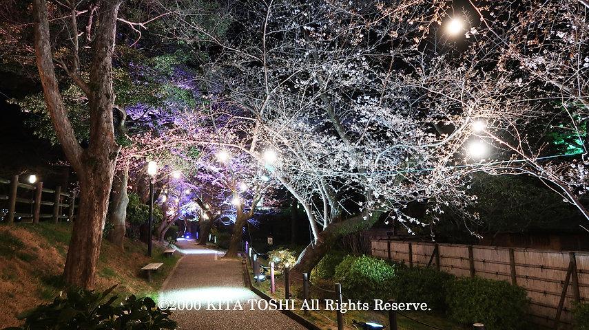 Light-up designer KITA TOSHI's design work Okz-Sakura1 (lighting designer)