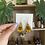 Thumbnail: Little Lined Shimmer Susan's | Andrenidae