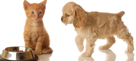 Puppy and Kitten Examinations and Vaccinations - Best Cedar Falls Veterinarians at Companion Animal Clinic. We can hardly wait to meet your new furry kid?