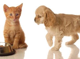 Kitten und Welpe Barfplan Junior Futterplan