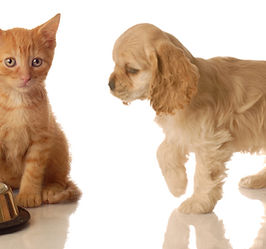 Photo of a kitten and puppy to represent allergies