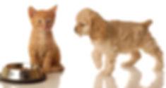Ginger cat kitten with cocker spaniel puppydog