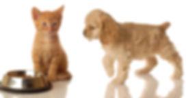 pet-services chat et chien visites à domicile