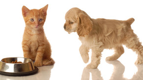 Pets Suited for Allergy Sufferers