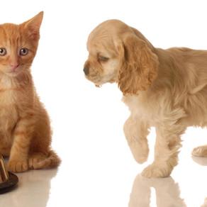 Le sevrage du chat et du chien