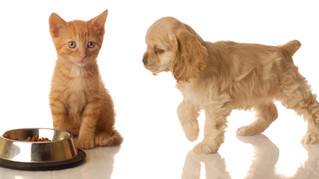 Family Pet Photography