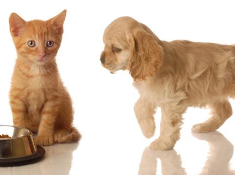 貓狗活在同一屋簷下 (二)