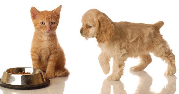 Kurs Dietetyka weterynaryjna i prawidłowe żywienie psów i kotów