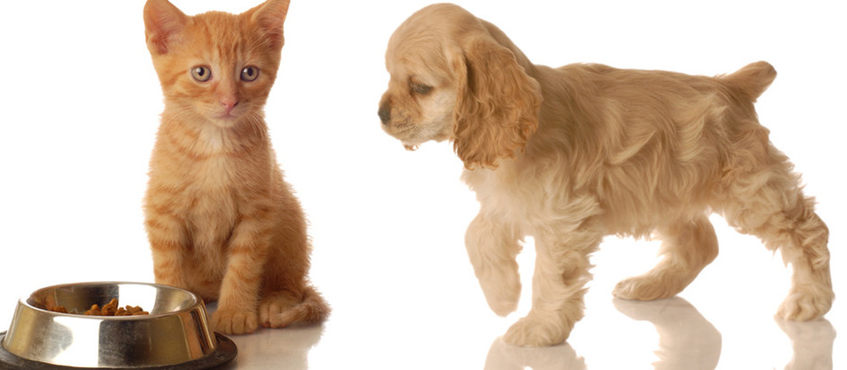 What To Expect From Your Pet Sitter