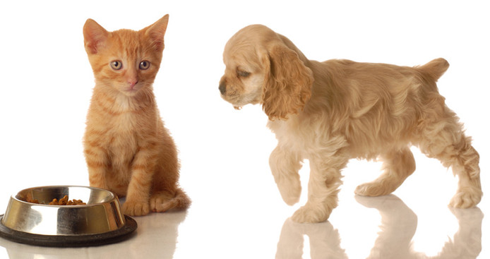 Kitten & Puppy