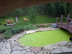 greenpond.jpg