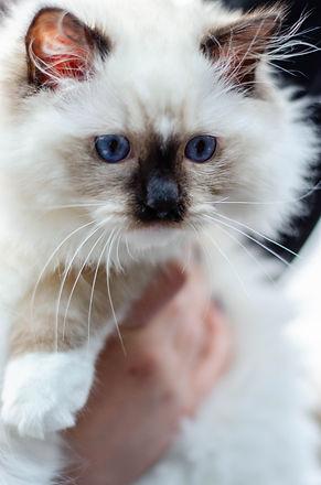Cats edited Website-5901.jpg
