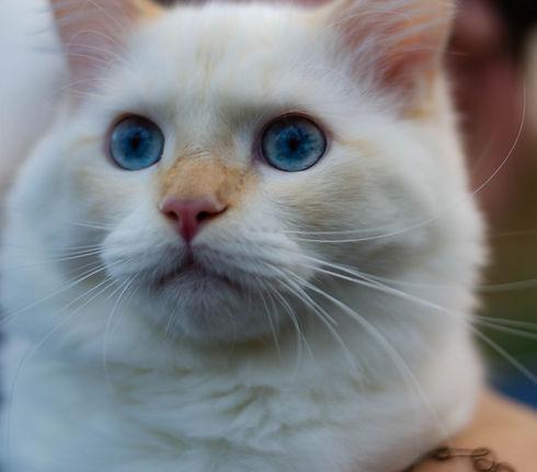 Cats%20edited%20Website-5966_edited.jpg