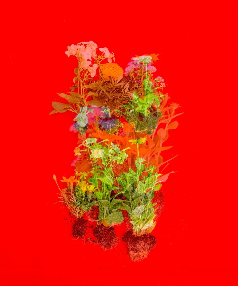 Red Fanua, 6