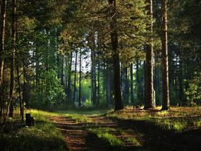 III Практическая конференция «Использование земель лесного фонда при недропользовании»