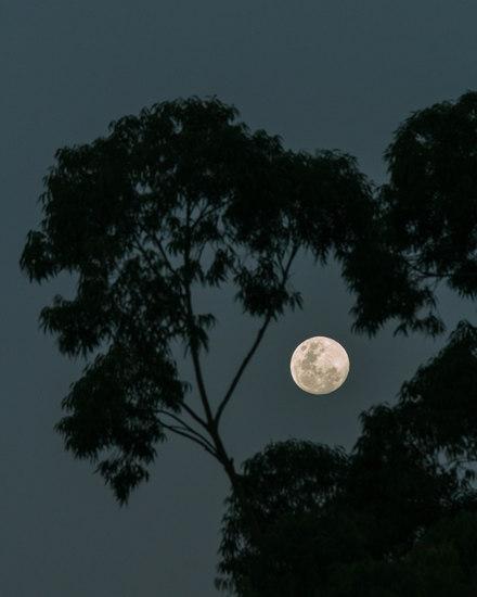 Lua vai