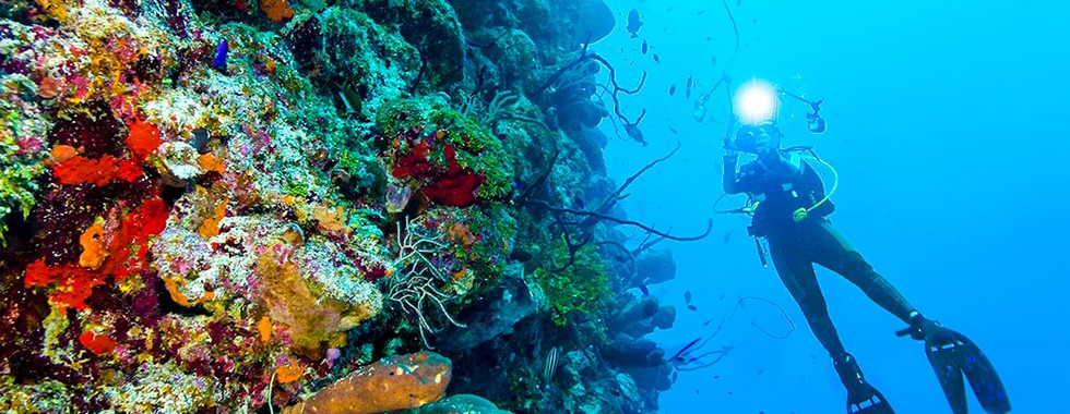 little-cayman-diving-bloody-bay-wall-106