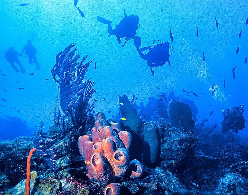 five-divers-on-reef-1060x834-min.jpg