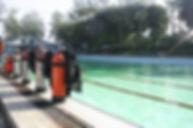 dive-578358_1280.jpg