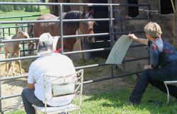 Drawing horses class