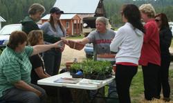 Making herb gardens