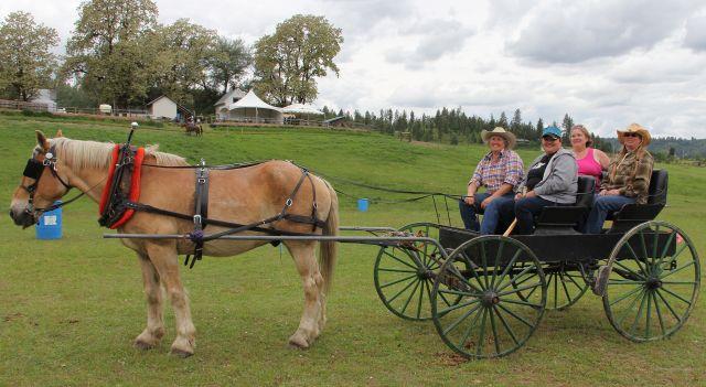 Driving horses - 1