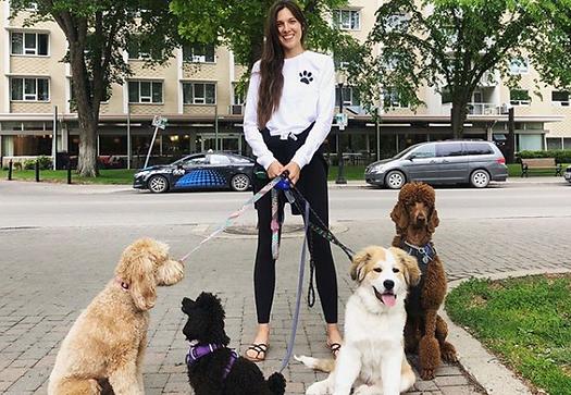 Rachael's_Rovers_Dog_Walks_1