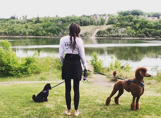 Rachael's_Rovers_Dog_Walks_2