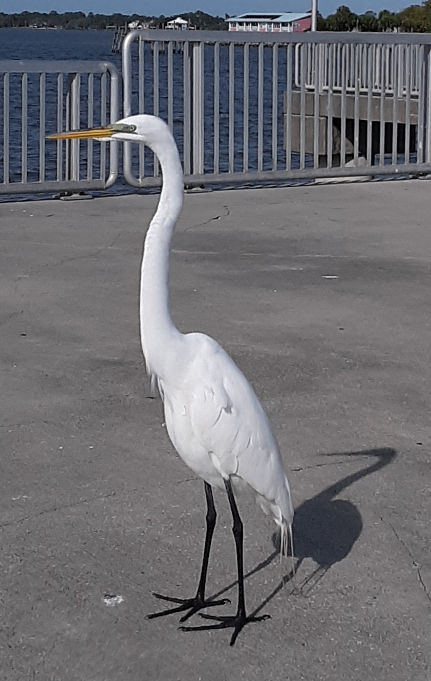 A white bird with a long neck and legs standing on a pier.