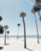 Palmeras en una playa