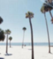 ビーチの椰子の木