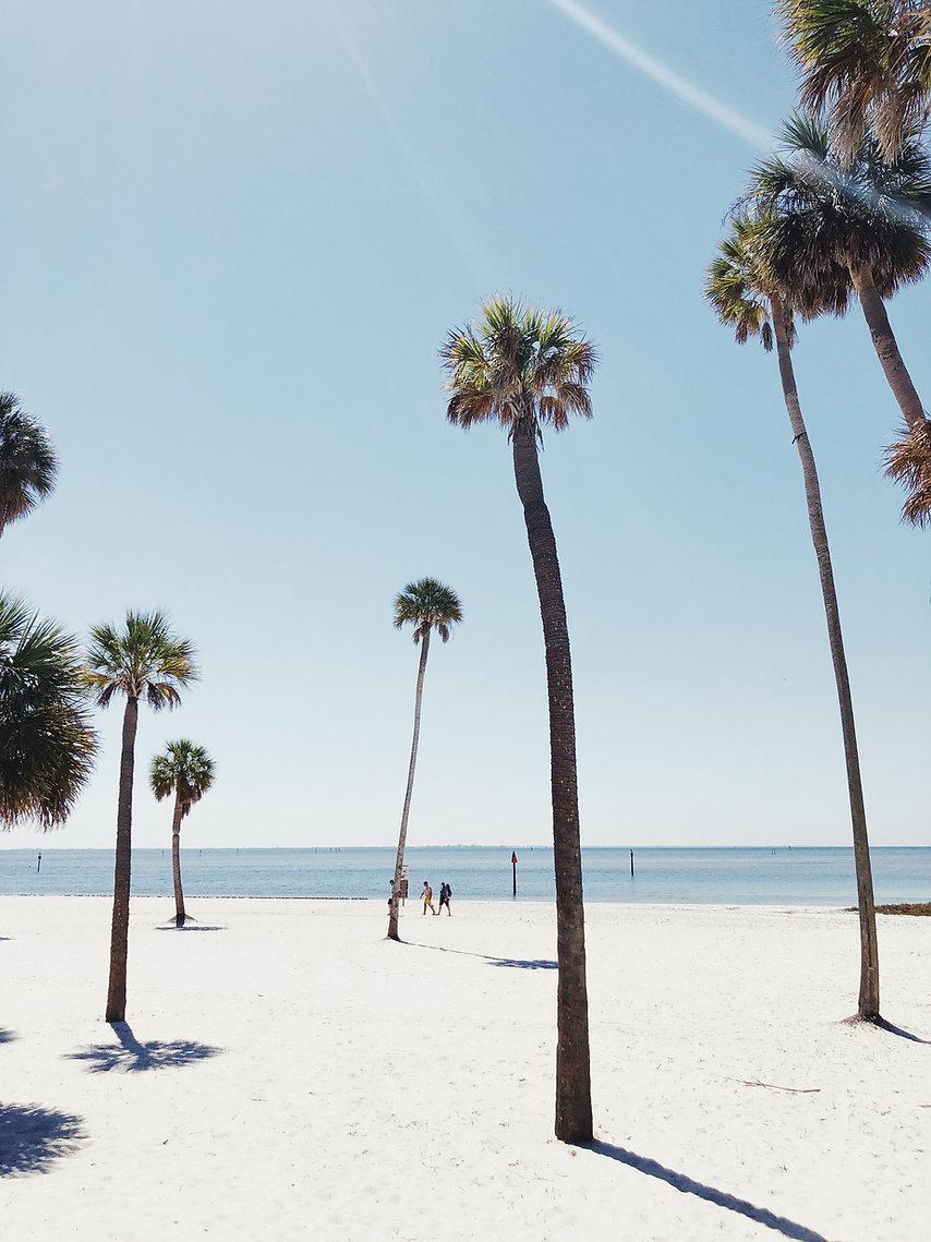 Palme su una spiaggia