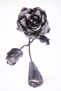 Black Rose, 2016
