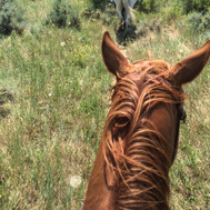 From a horse's eye view