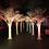 Thumbnail: White Palm Trees