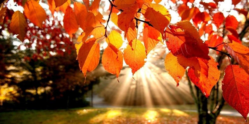 l'automne, la saison de la récolte