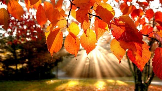 L'automne : la saison du recentrage et de l'organisation