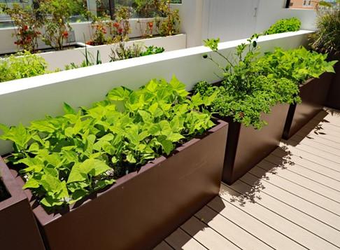 Set up a Patio Garden