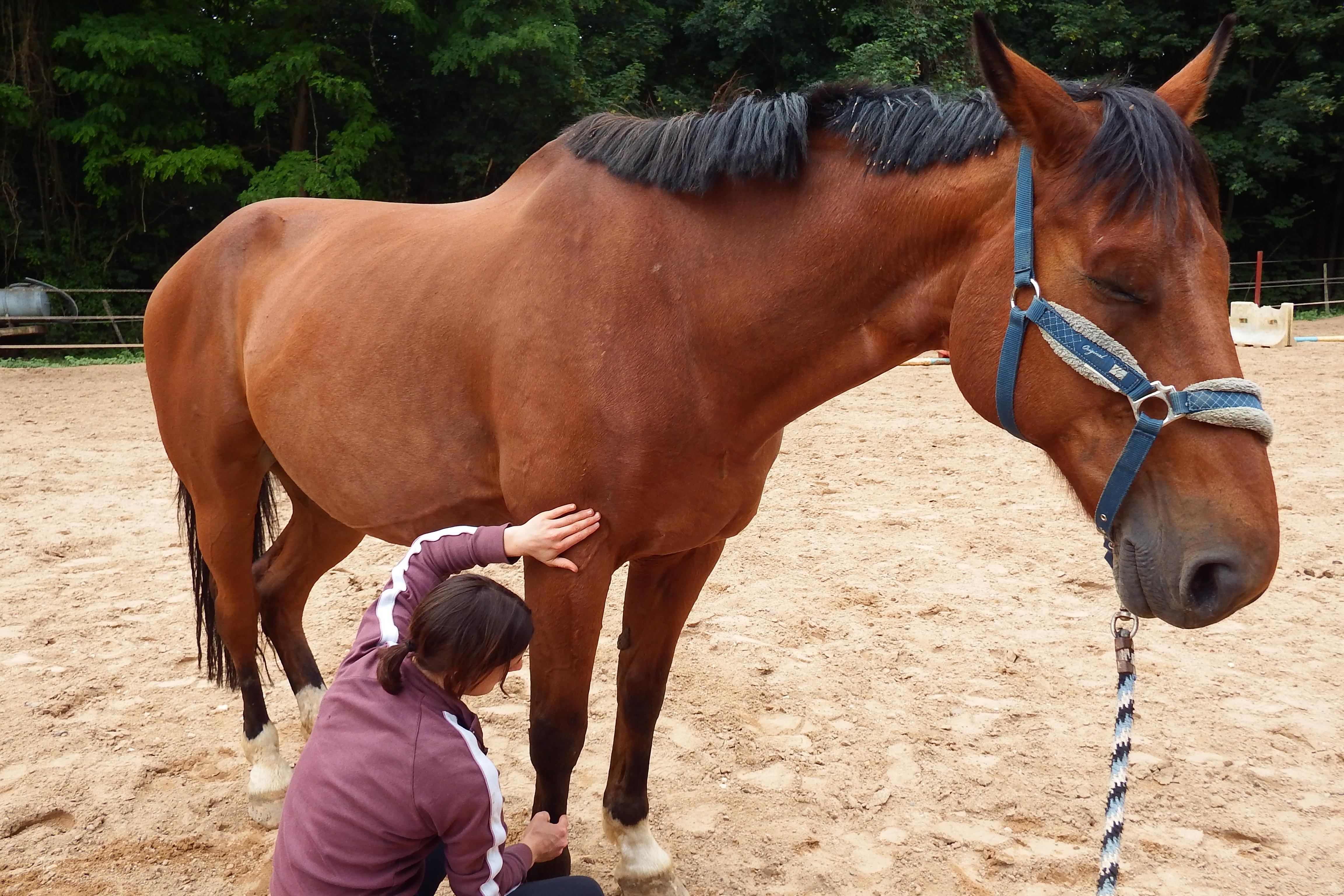 shiatsu equin jouy aux arches