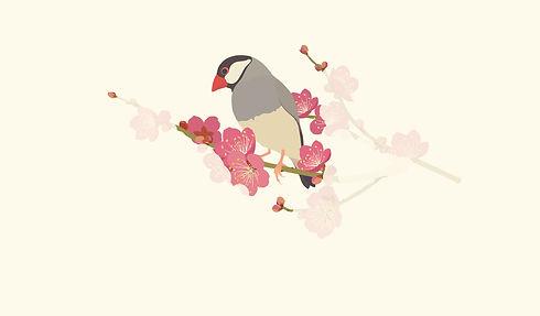 文鳥のイラスト