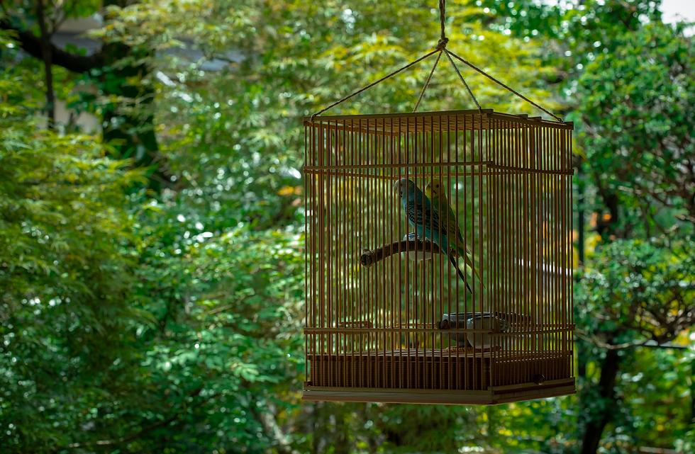 2羽のいんこが竹製の鳥籠に入っている様子