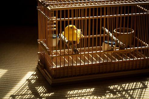 竹製の鳥籠に入っているカナリア