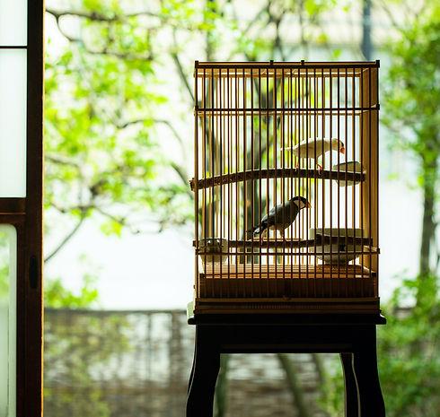 竹製の鳥籠に入っている2羽の文鳥