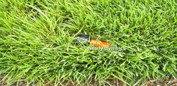 Lawn sprinkler in grass